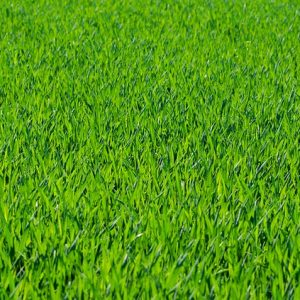 דשא סינטטי דגם גולן